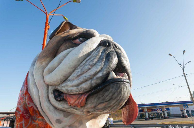 Морда собаки метро Почайна