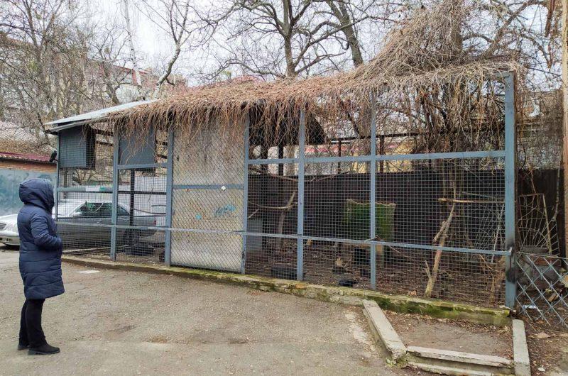 Клетка с воронами Киев