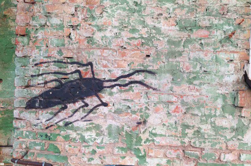 Таракан на доме на Воровского 34