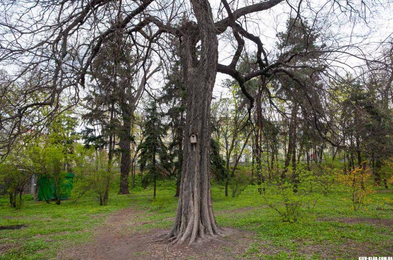 Деревья ботанического сада