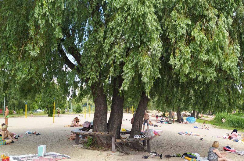 Тельбин дерево Цоя